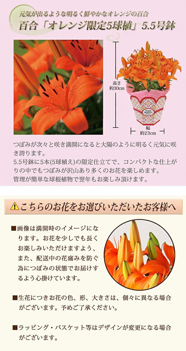 百合【オレンジ5】