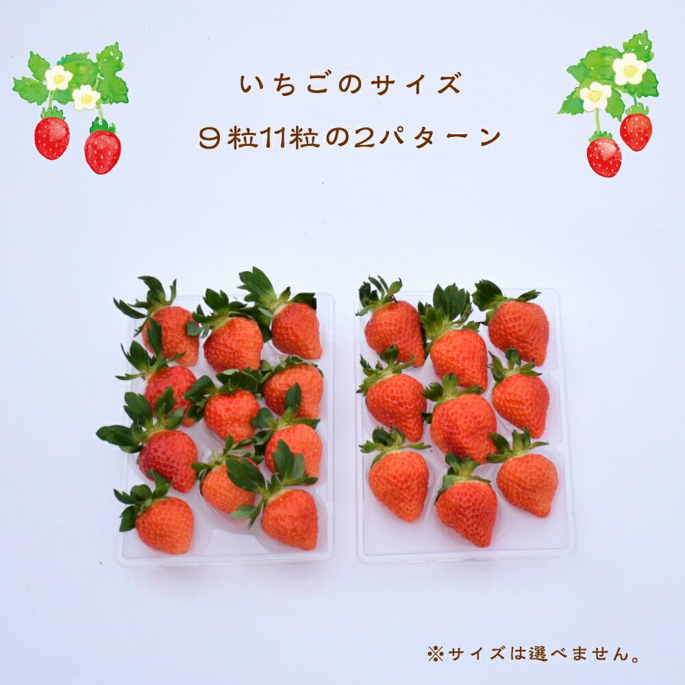 苺のサイズ 9粒と11粒の2パターン サイズは選べません。