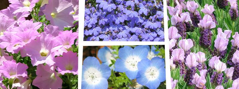 春色で気分を変えよう!春の花苗特集