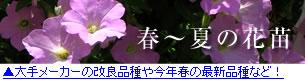 有名メーカーの春の花苗