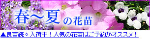 春〜夏の花苗予約開始
