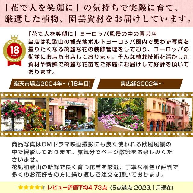 当店は遊園地の花の植栽・花イベントなどを手掛けている会社が運営している園芸専門店