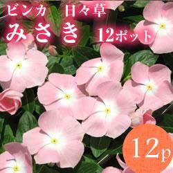 日々草みさき12p
