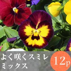 よく咲くスミレ12pMIX