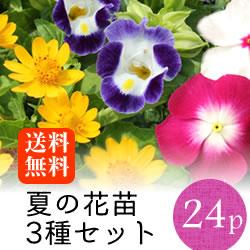 夏の花苗3種セット24p