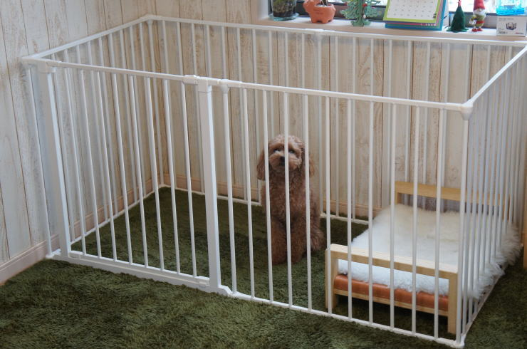 In Door Cage For Large Dog
