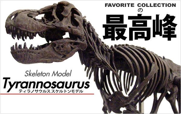 フェバリットモデルの最高峰 スケルトンモデル ティラノサウルススケルトンモデル