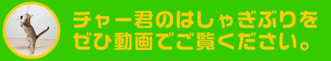 ペッツルート カシャカシャひもじゃらし 日本製