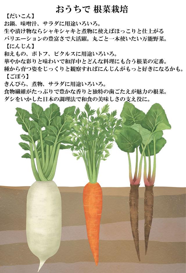 栽培キット おうちで 根菜栽培 001