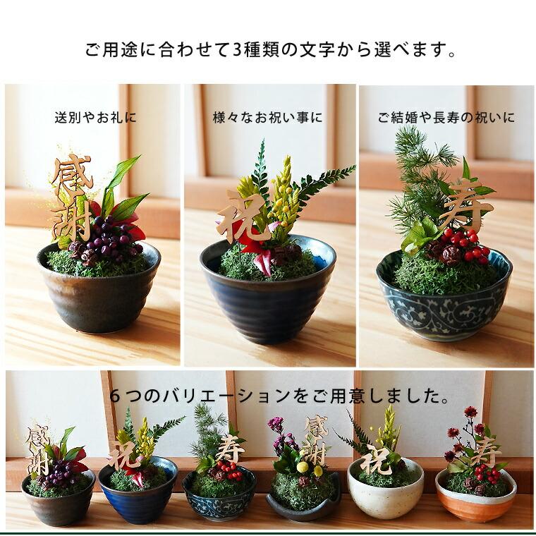 盆栽 苔玉 2 誕生日 花 アレンジ