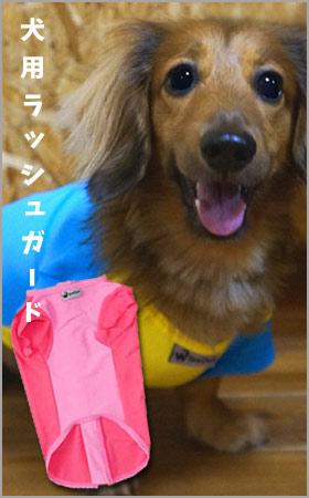犬用ラッシュガード