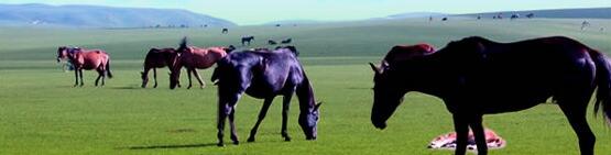 什么是马胎素