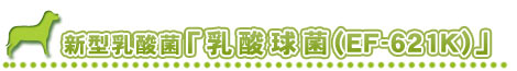 新型乳酸菌(EF-621K)