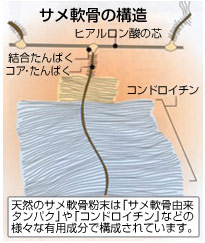 サメ軟骨の構造