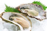 牡蛎提取物