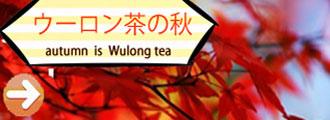 ウーロン茶の秋