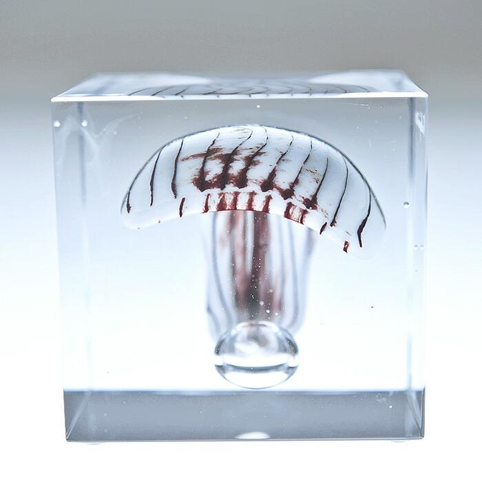iittala/イッタラ (Nuutajarvi/ヌータヤルヴィ) Oiva Toikka オイバ・トイッカ Annual Cube アニュアル キューブ (箱入り) 《ビンテージ/vintage/ヴィンテージ》  2010年