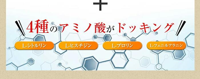 4種のアミノ酸がドッキング