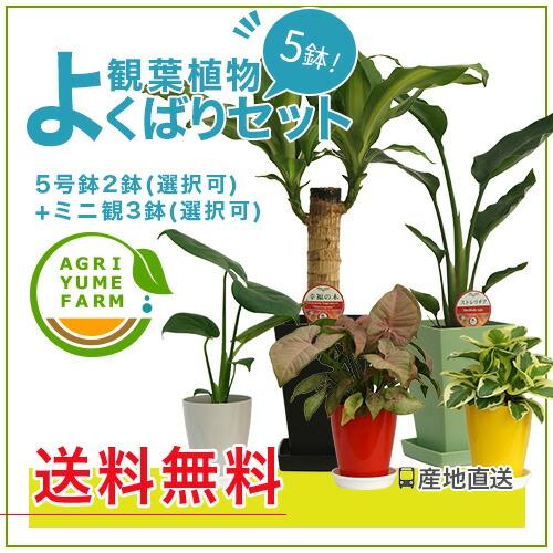 観葉植物よくばりセット