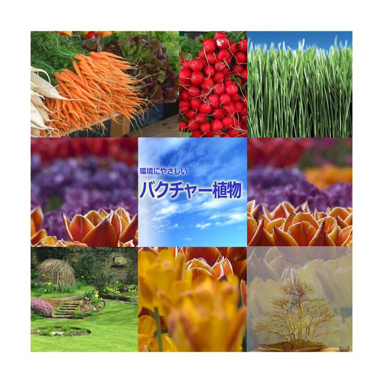 自然界に存在していない物は使用していない安心・安全な植物活性材 バイオの力でお花も活き活きと元気回復 植物活性材「バクチャー植物」
