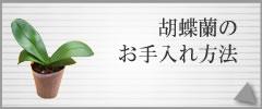 胡蝶蘭 今月のお手入れ方法