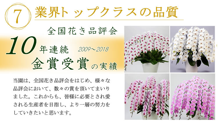 胡蝶蘭 トップクラスの品質