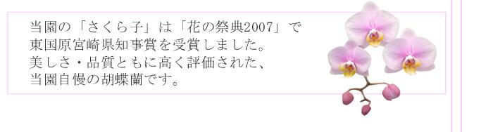 宮崎県知事賞受賞記念ページへ