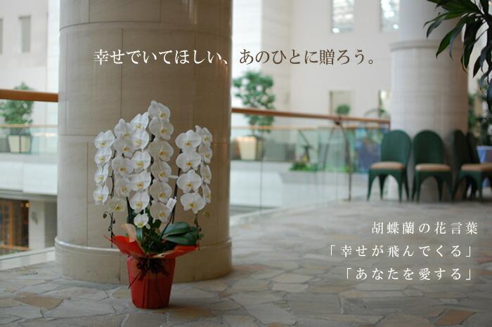 胡蝶蘭花言葉