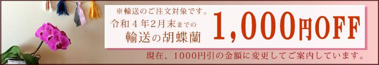 胡蝶蘭1000円引