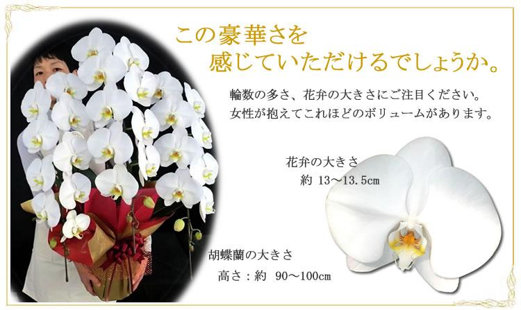 胡蝶蘭が人を持った写真