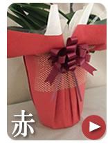 胡蝶蘭のラッピング 赤