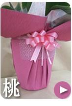 胡蝶蘭のラッピング ピンク
