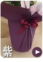 胡蝶蘭のラッピング 紫