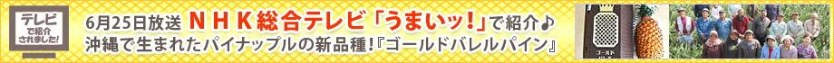 NHK総合テレビ「うまいッ!」で紹介されたパイナップル「ゴールドバレルパイン」