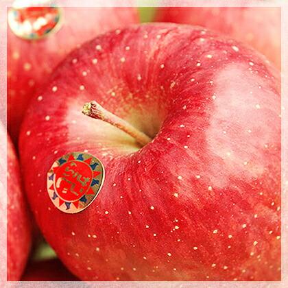 日本人の一番好きな味!的場りんご園のサンふじ