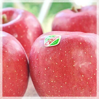 一足早く味わえる!的場りんご園の早生ふじ