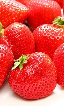【徳島県産】 日本で唯一、徳島でしか栽培されていないブランド苺