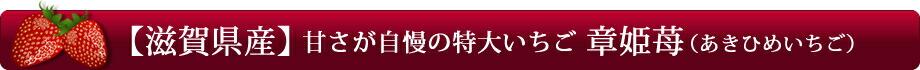 【滋賀県産】甘さが自慢の特大いちご「章姫苺(あきひめいちご)」