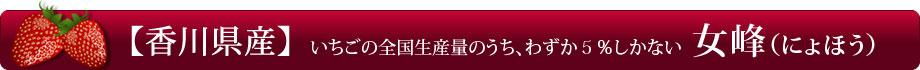 【香川県産】希少な女峰苺(にょほういちご)