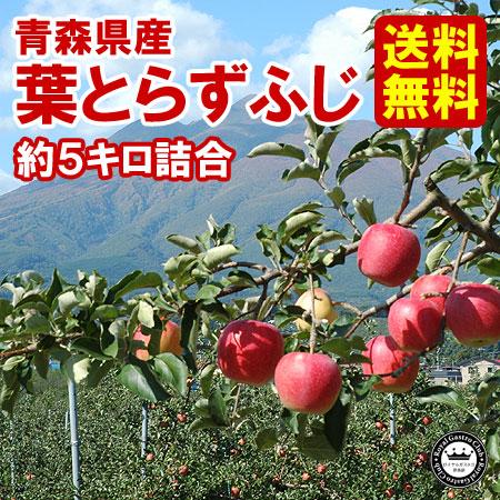 【ご家庭用】青森産りんご 葉取らずふじ(約5kg/14〜20玉)
