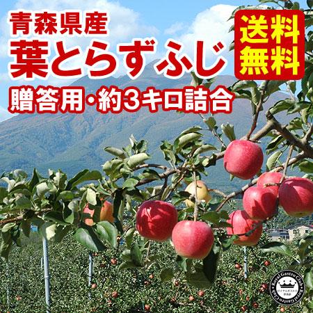 【贈答用】青森産りんご 葉取らずふじ(約3kg/9〜11玉)