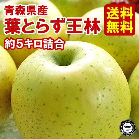 【ご家庭用】青森産りんご 葉取らず王林(約5kg/14〜20玉)