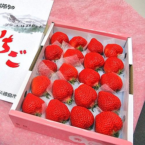 ももいちご(桃苺) 徳島県佐那河内村産 16〜20玉 化粧箱入り