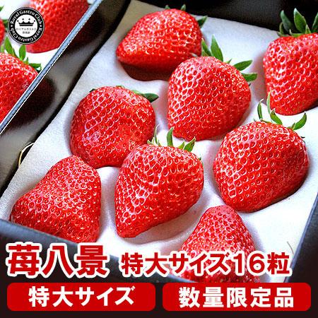 滋賀産「苺八景」(特大サイズ/16粒入)