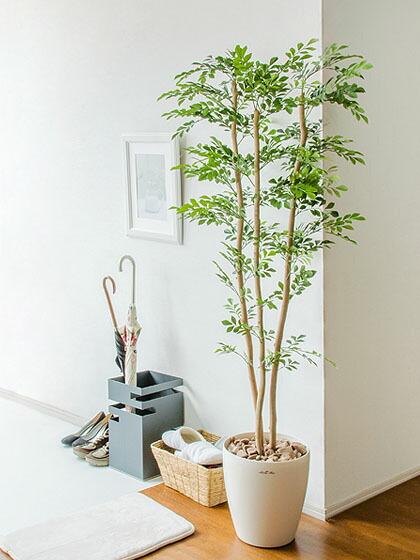 air-rhizome | rakuten global market: plant light catalyst large