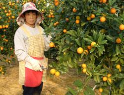 生産者の一人美郷町西郷区の富井さん