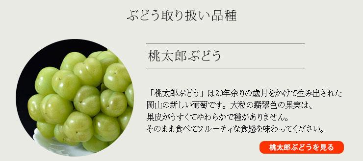 取り扱い品種:桃太郎ぶどう