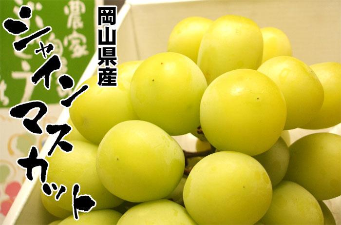 晴王麝香葡萄