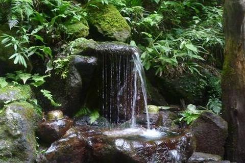 箱根の伏流水