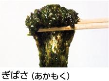 ぎばさ(あかもく)